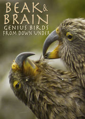 Beak and Brain: Genius Birds From Down Under