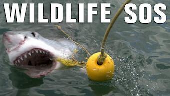 Wildlife SOS (2010)