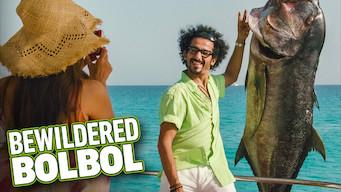 Bewildered Bolbol (2010)